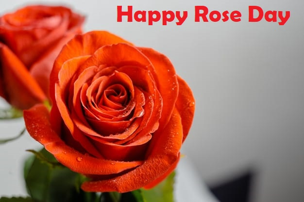 happy rose day pic